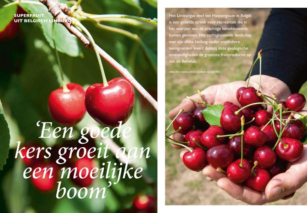 Kersen, Superfruit uit Belgie, reportage van Santmedia over de kersenpluk in Belgie